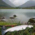 Sør-Tverrfjorddalen 2.vannet